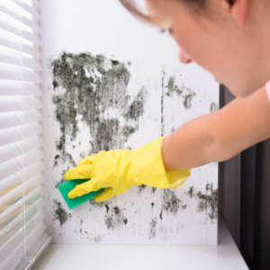 cleaning mold from windows woman cleaning mold off window sill how to prevent mold growth on windows sci